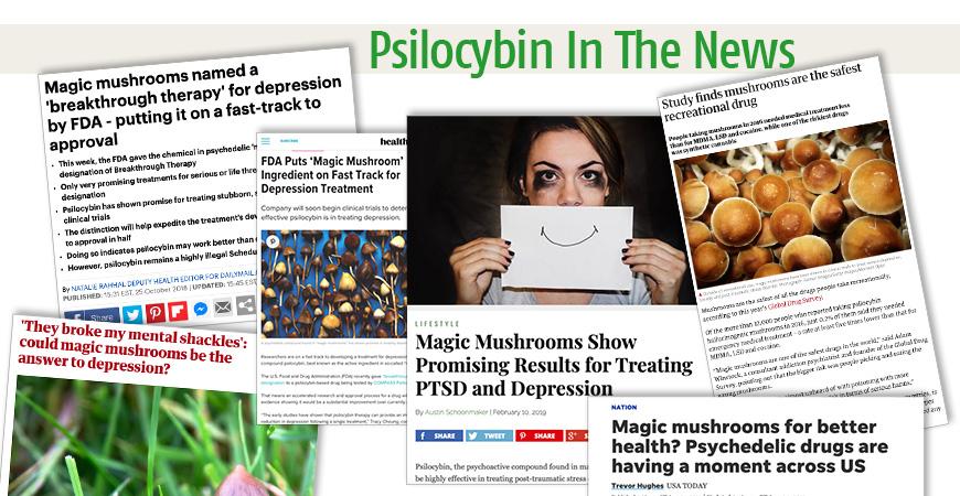 Psilocybin In The News