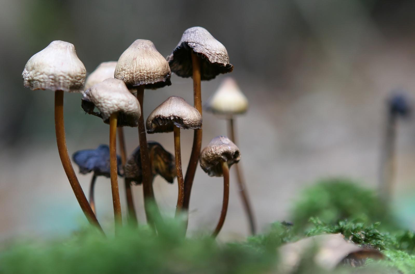 store magic mushrooms
