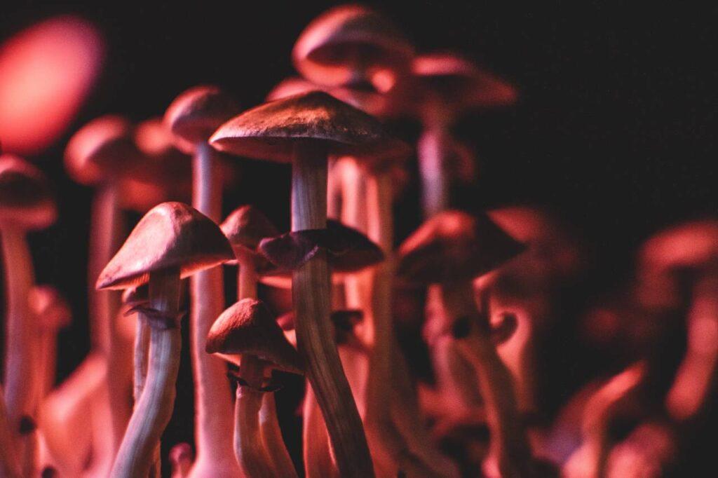 Psilocybin Microdosing and Anxiety